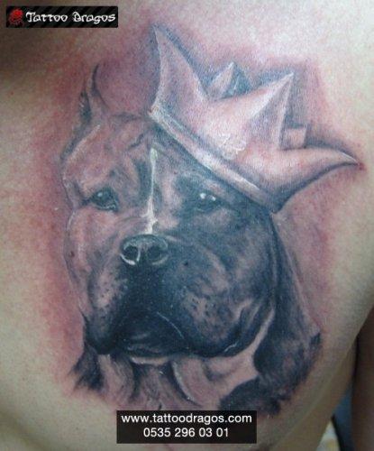 Şampiyon Köpek Tattoo