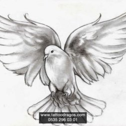 Güvercin Dövme Modeli